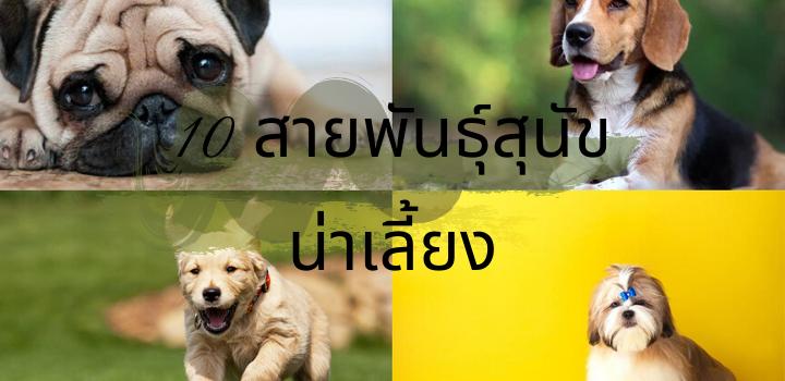 10 สายพันธุ์สุนัขน่าเลี้ยง